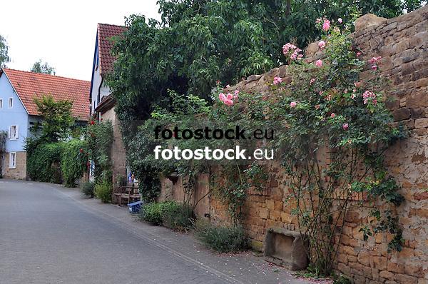 Dorfstraße in Tiefenthal mit Rosenstöcken