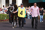 Live Lively in the walking ringbefore winning the Davona Dale (G2) at Gulfstream Park. Hallandale Beach Florida. 02-23-2013