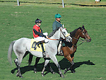 October 9, 2010.Liberian Freighter approaching the gate for The Oak Tree Mile at Hollywood Park, Inglewood, CA._Cynthia Lum/Eclipse Sportswire.com
