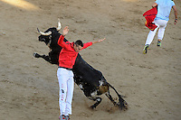 Participant jumps in front of bulls after the bull run of the San Sebastian de los Reyes Festival, near Madrid, on august 26, 2014. © Pedro ARMESTRE