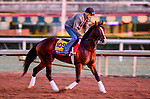 October 28, 2019 : Breeders' Cup Classic entrant War of Will, trained by Mark E. Casse, exercises in preparation for the Breeders' Cup World Championships at Santa Anita Park in Arcadia, California on October 28, 2019. Scott Serio/Eclipse Sportswire/Breeders' Cup/CSM