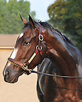 8.1.10 Horse of the year Rachel Alexandra at the spa