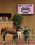 September 09, 2014: Hip #248 Giant's Causeway - Silky Serenade colt consigned by Gainesway sold for $500,000 to MV Magnier at the Keeneland September Yearling Sale.   Candice Chavez/ESW/CSM