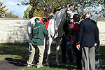 14 October.  Patchen Princess, a rare white thoroughbred ran in the 6th race at Keeneland, 2 year old Maiden, gaining attention from many spectators who commented on her unique color.   Owner Warren Rosenthal oversees his filly as she is being saddled.