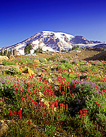 M00276M.tiff   Mount Rainier with Indian Paintbrush, Washington