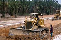 MALAYSIA, road construction, plantation with oil palm on deforested forest / MALAYSIA,<br /> Strassenbau, Plantage mit Oelpalmen auf gerodetem Regenwald