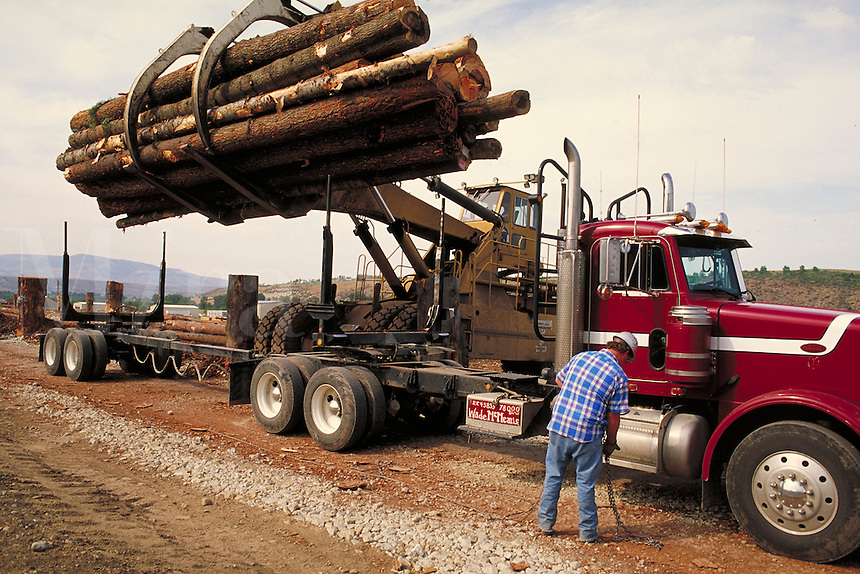 Load of logs being unloaded from truck at sawmill. Forest industry, Logging, Forestry, Transportation, resource industry. Omac Washington USA.