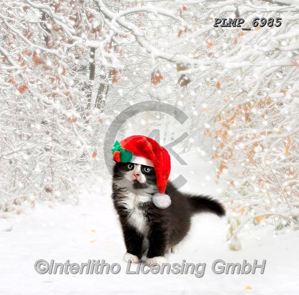 Marek, CHRISTMAS ANIMALS, WEIHNACHTEN TIERE, NAVIDAD ANIMALES, photos+++++,PLMP6985,#xa# ,kittens,cats