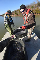 Jon Stein (right), Northwest Arkansas regional fisheries supervisor for Game and Fish, takes a small crappie from the gill net. Walleye are the focus of the study at Lake Fort Smith, but Stein also looked at crappie, white bass and other species during the research.<br />(NWA Democat-Gazette/Flip Putthoff)