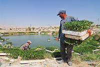 JORDANIEN Wassermangel und Landwirtschaft im Jordan Tal, Farmer mit Gemuese Setzlingen an einem Wassertank / JORDAN, water shortage and agriculture in the Jordan valley , farmer with vegetable seedlings, swimming nursery in water pond