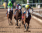 November 2, 2019: Covfefe, ridden by Joel Rosario, wins the Breeders' Cup Filly & Mare Sprint on Breeders' Cup World Championship Saturday at Santa Anita Park on November 2, 2019: in Arcadia, California. Michael McInally/Eclipse Sportswire/CSM