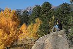 Aspen trees, Rocky Mountain National Park, Colorado.