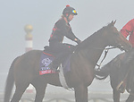 Point of Entry, trained by Shug Mcgaughey,exercises in preparation for the upcoming Breeders Cup at Santa Anita Park on October 31, 2012.