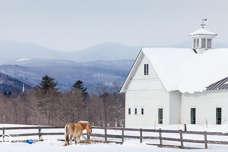 A horse farn in Randolph, VT, USA