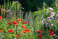 Unser Naturgarten in Hammer, Garten, insektenfreundlicher Garten, vogelfreundlicher Garten, blütenreich, Wildblumen, Wildblumengarten, mit Mohn, Rose, Rosen, Gartendeko