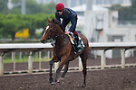 SHA TIN,HONG KONG-APRIL 23: Highland Reel ,trained by Aidan O'Brien ,exercises in preparation for the Audemars Piguet QEll Cup at Sha Tin Racecourse on April 23,2016 in Sha Tin,New Territories,Hong Kong (Photo by Kaz Ishida/Eclipse Sportswire/Getty Images)