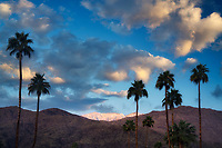 Snow, sunrise  and palm trees on San Jacinto Mountains. Palm Springs, California