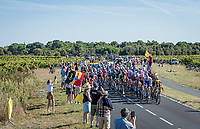 speeding peloton in the race finale, prepping for a bunch sprint<br /> <br /> Stage 10 from île d'Oléron (Le Château-d'Oléron) to Île de Ré (Saint-Martin-de-Ré)(169km)<br /> <br /> 107th Tour de France 2020 (2.UWT)<br /> (the 'postponed edition' held in september)<br /> <br /> ©kramon