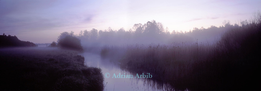 Early morning on marshland on the Narewka river. Bialowieza forest, Poland.<br /> This wild part of Poland is home to bison, wolves and bears.