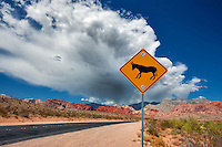 Road, mule sign, thunderstorm clouds and Rock formations in Red Rock Canyon National Conservation Area, Nevada