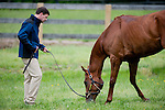 Trainer Graham Motion with Animal Kingdom, winner of the 137th Kentucky Derby, as he grazes after exercising for the Preakness at the Fair Hill Training Center on May 18, 2011 in Fair Hill, Maryland.