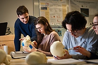 Professor Ryan Harrod helps student Roslyn White as she learns to identify features of the human skull using models during Harrod's Biological Anthropology Lab (ANTH A205L) in UAA's Beatrice McDonald Hall.