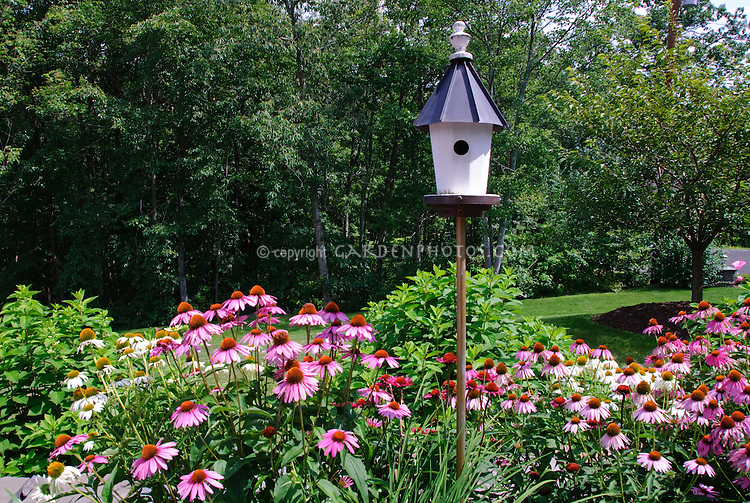 Native wildflowers plants Echinacea coneflower in mixed colors with birdhouse in summer gardenand lawn grass, trees