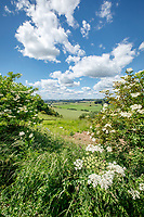Landscape view at a field boundary - Lincolnshire, June