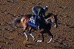 November 3, 2020: Calibrate, trained by trainer Steven M. Asmussen, exercises in preparation for the Breeders' Cup Juvenile at Keeneland Racetrack in Lexington, Kentucky on November 3, 2020. John Voorhees/Eclipse Sportswire/Breeders Cup/CSM
