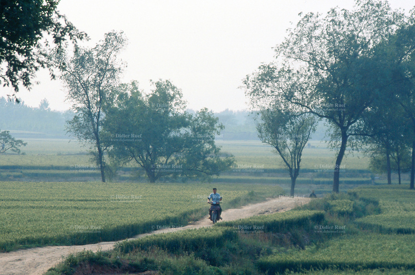 China. Province of Henan. Village Xiaotan. A man rides his motorbike on a dirt road through the wheat fields. © 2004 Didier Ruef