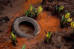 Pollution, A tire dumped in a polluted marsh - surrounded by skunk cabbage, Washington State, Willapa Bay, Pacific County,.