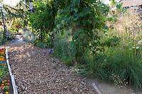 Wood chip mulched path in backyard garden with grape arbor and bunch grasses - Barbata garden, Walnut Creek, California