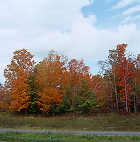 The golden tones of autumn in upstate New York