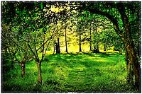 Nature by Peter Wochniak