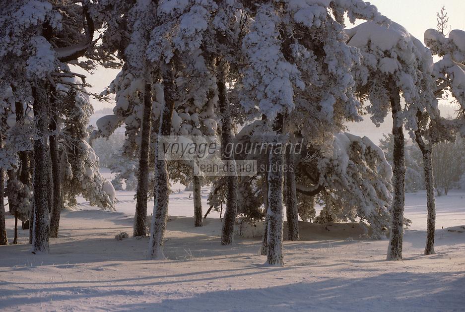 Europe/France/Auvergne/43/Haute-Loire/Env. de Saint-Julien-Chapteuil: La forêt en hiver