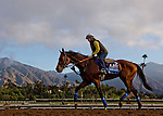 October 26, 2014:  One Lucky Dane, trained by Bob Baffert, exercises in preparation for the Sentient Jet Breeders' Cup Juvenile at Santa Anita Race Course in Arcadia, California on October 26, 2014. Scott Serio/ESW/CSM