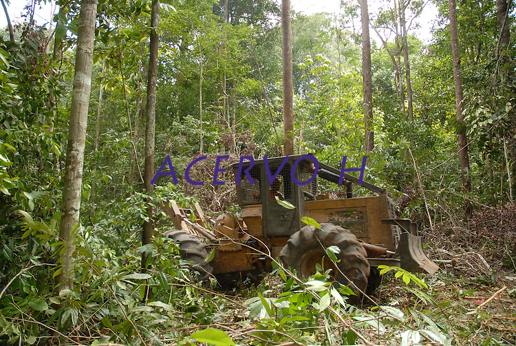 Área de manejo sustentável para exploração madeireira da Cikel.<br /> Paragominas, Pará, Brasil<br /> Foto Paulo Santos/Interfoto<br /> 17/11/2008
