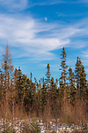Sax-Zim Bog in northern Minnesota.