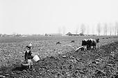 Simbata De Jos, Transylvania<br /> Romania<br /> April 25, 1992<br /> <br /> Cultivating and planting