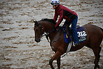October 28, 2015:  Twilight Eclipse, trained by Thomas Albertrani and owned by West Point Thoroughbreds, Inc., exercises in preparation for the Longines Breeders' Cup Turf at Keeneland Race Track in Lexington, Kentucky on October 28, 2015. John Voorhees/ESW/CSM