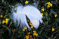 A tiny feather lies among even tinier yellow flowers in an urban park.