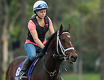 ARCADIA, CA - OCT 31: Green Mask, owned by Saeed Almaddah Abdullah and trained by Brad Cox, exercises in preparation for the Breeders' Cup Turf Sprint at Santa Anita Park on October 31, 2016 in Arcadia, California. (Photo by Casey Phillips/Eclipse Sportswire/Breeders Cup)