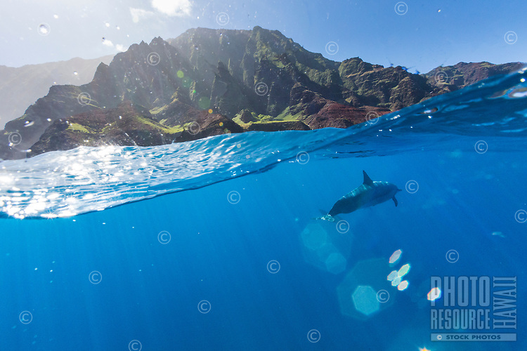 Over and under image of a spinner dolphin swimming off the Na Pali Coast on Kaua'i.