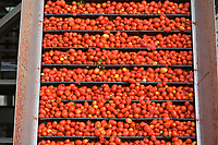 ITALY: canned tomato