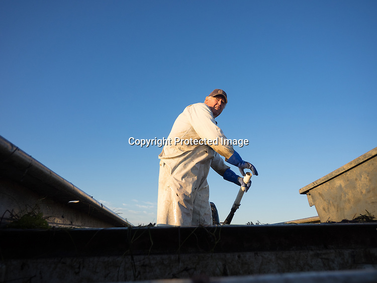 Dwight Marshall pulls crab pots from his skiff and sorts crabs in his shanty on Smith Island in Chesapeake Bay