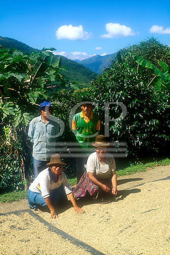 San Juan del Oro, Peru. Coffee family with coffee beans drying in the sun.
