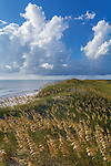 Cape Hatteras National Seashore, North Carolina<br /> Seaoats (Uniola paniculata) on dunes of Hatteras Island, Cape Hatteras