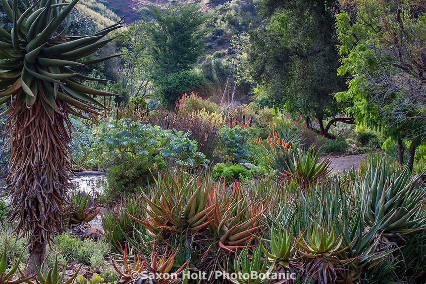 South African succulent garden at Taft Gardens; Ojai, California