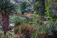 South African succulent garden at Taft Gardens; Ojai, California