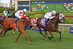 HALLANDALE BEACH, FL -DECEMBER 03:   #10 Super Spender (KY)  with jockey Nik Juarez on board,  wins the $110K  Claiming Crown Canterbury Stakes  at Gulfstream Park on December 03, 2016 in Hallandale Beach, Florida. (Photo by Liz Lamont/Eclipse Sportswire/Getty Images)